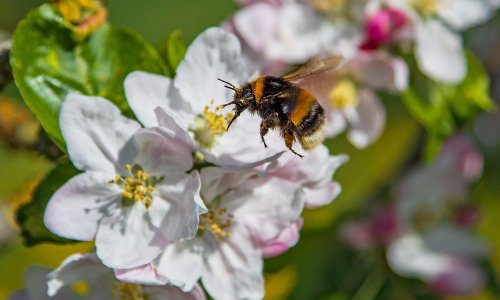 Toxic impact of pesticides on bees has doubled, study shows