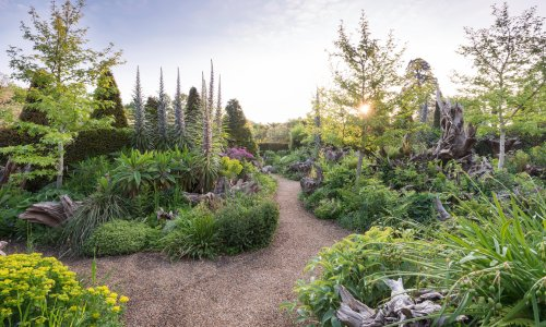 'Unorthodox and magical': how tree stumps can transform your garden