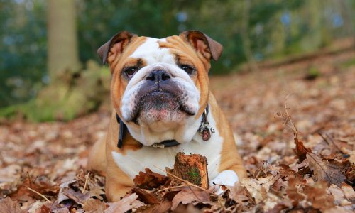 Down boy: why grumpy dogs are more intelligent than happy-go-lucky hounds
