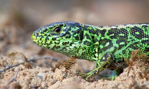 'A lizard hitched a lift in my bag!': 10 readers on their most memorable holiday souvenirs