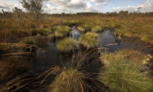 Sales of peat compost to gardeners to be banned from 2024