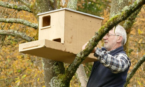 Country diary: free accommodation for feathered folk