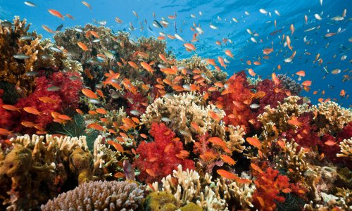 Nasa scientists find unlikely tool as rising temperatures bleach corals: a phone app
