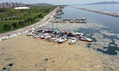 Turkey struck by 'sea snot' because of global heating