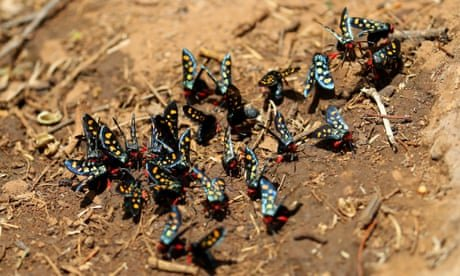 'Insect apocalypse' poses risk to all life on Earth, conservationists warn
