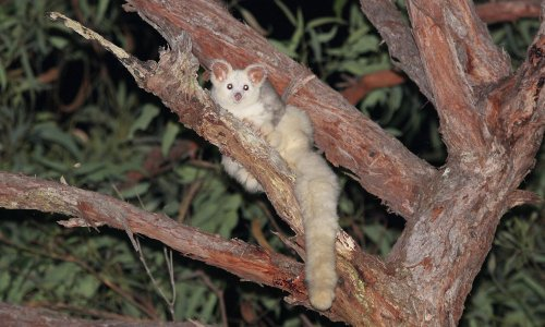 Logging exempt from environment laws despite destroying threatened species' Victorian habitat, court finds