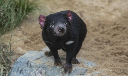 Coalition proposes to scrap recovery plans for 200 endangered species and habitats