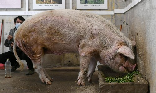 China mourns passing of acclaimed pig that survived 2008 quake