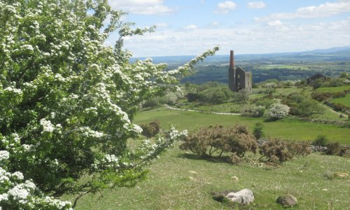 Country diary: among the ancient stone of Bodmin, hawthorn spreads like snow
