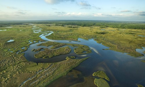 The Everglades are dying. An alliance between Biden and Republicans could save them