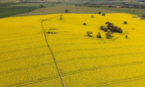 NSW organic farmers call for more protection as state lifts ban on GM crops