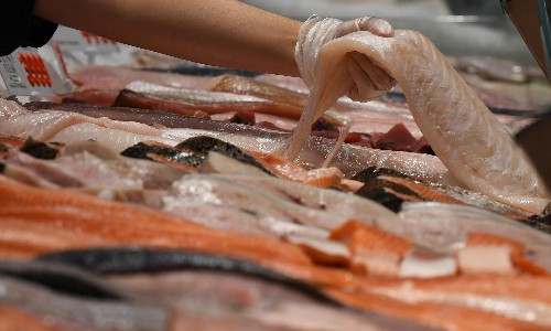 Australian seafood consumers urged to stop buying flake to protect sharks