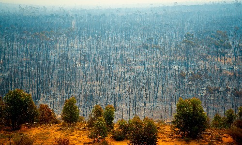 Fifth of countries at risk of ecosystem collapse, analysis finds