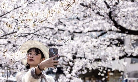 Climate crisis 'likely cause' of early cherry blossom in Japan
