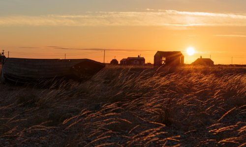 'Why go to the Sahara when you can visit Kent?': 'desert' life in Dungeness