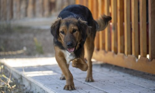 Owners offload dogs bought in lockdown by pretending they are strays