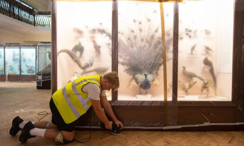 Six out of 10 museums now fear for their survival – but there have been surprising positives