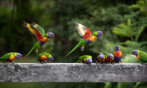 World is home to 50bn birds, 'breakthrough' citizen science research estimates