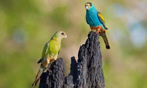 Nature's Paris moment: does the global bid to stem wildlife decline go far enough?