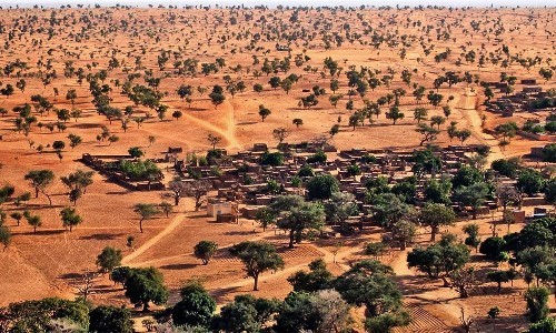 One, two, tree: how AI helped find millions of trees in the Sahara