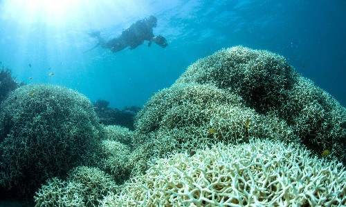 Scientists claim Coalition misrepresented their evidence to Great Barrier Reef inquiry