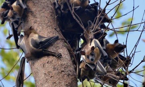 Farm plan poses 'catastrophic' threat to Zambian park vital for fruit bats