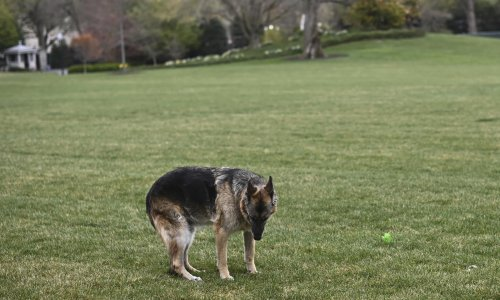 Champ, Joe Biden's German shepherd and 'sweet, good boy', dies aged 13