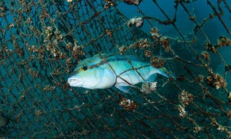 The myth of 'sustainable' fishing