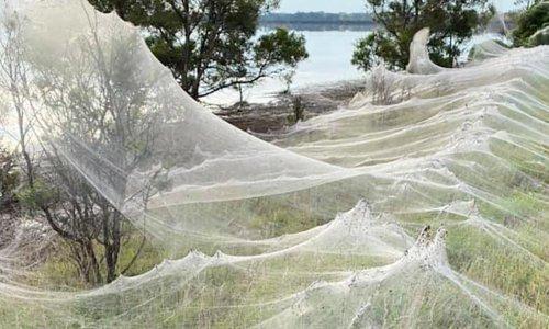 'They look like waves': spider webs blanket Gippsland after Victorian floods