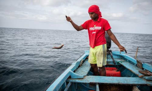 Guardians of the Sea: Cape Verde's 'fish detectives' try to keep extinction at bay