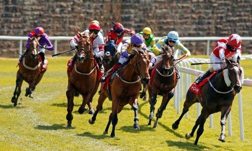 Talking Horses: Showalong can shine at York warm-up for Royal Ascot