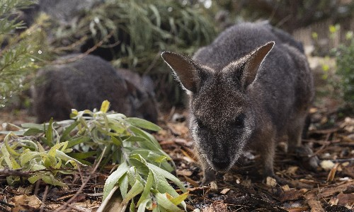 Predator-proof fence: 10km barrier to be built across Wilsons Promontory to protect native wildlife