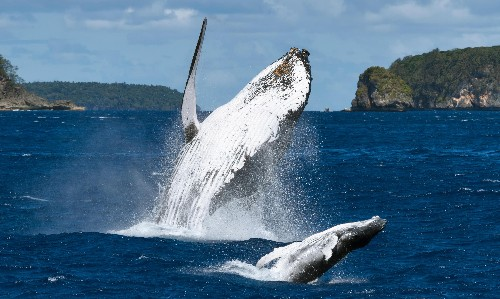 More than 50 countries commit to protection of 30% of Earth's land and oceans