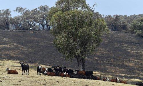 Climate crisis cuts Australian farm profits by a quarter over past 20 years