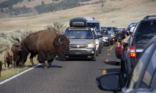 Yellowstone had 1m visitors in July alone. That's unsustainable for US national parks