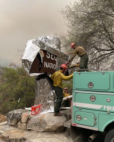 World's largest tree wrapped in fire-resistant blanket as California blaze creeps closer