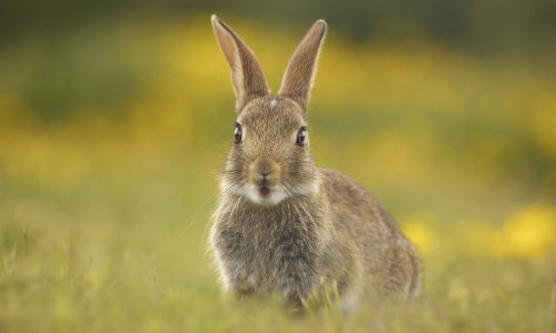 Country diary: the warren is here, but the fluffle of rabbits has gone