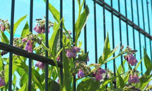 Country diary: the communal joy of an urban wildflower walk