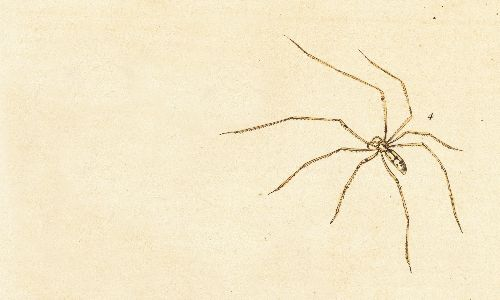 Daddy longlegs: there is one piece of information every child will know