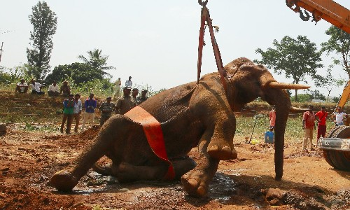 Elephant trapped in Indian well rescued in 12-hour crane operation
