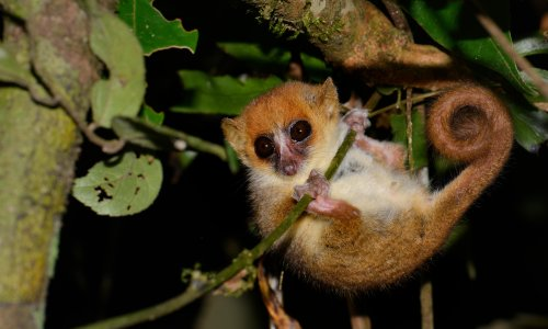 Lemurs and giant tortoises among species at risk if global heating hits 3C