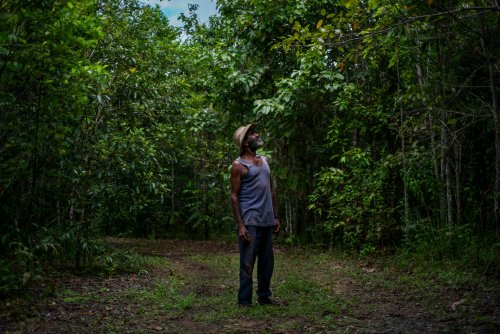 'This is how it should be': replanting the Daintree rainforest