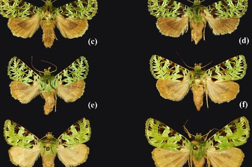 Moths to monkeys: 503 new species identified by UK scientists