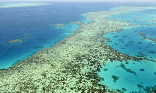 Queensland minister says UN warning on Great Barrier Reef status shows Morrison must act