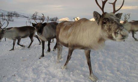 Sámi reindeer herders file lawsuit against Norway windfarm