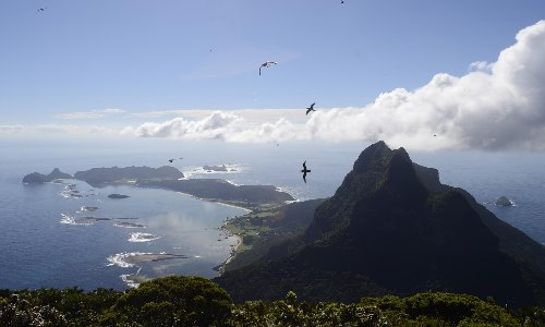 Rats reappear on Lord Howe Island for the first time since 2019 eradication program