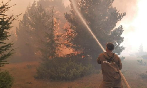 Russia forest fire damage worst since records began, says Greenpeace