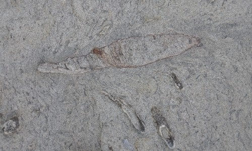 Giant worm's undersea lair discovered by fossil hunters in Taiwan