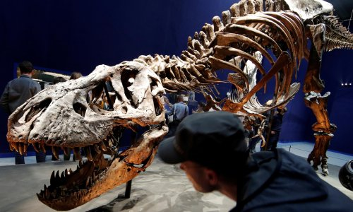 'That's a lot of teeth': 2.5 billion T rex walked the earth, researchers find