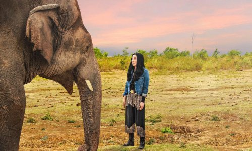 Can Cher save the world's loneliest elephant?